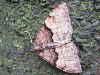 Photoscotosia